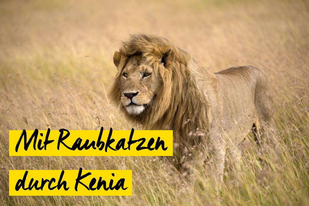Raubkatzenfotografie in Kenia